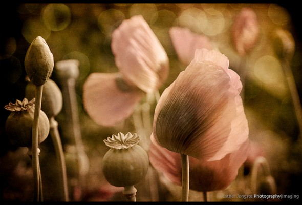 Esther Emma Jongste - Photo Talk #23
